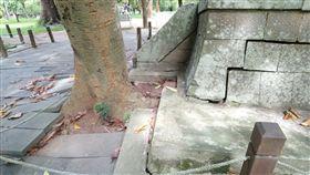 嘉義市,神社遺址,樹根入侵,移植,修復
