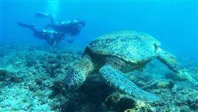 小琉球,海龜。(圖/高鐵提供)