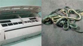 泰國,冷氣機,蛇,外蓋,壁虎。(圖/翻攝自泰國世界日報)