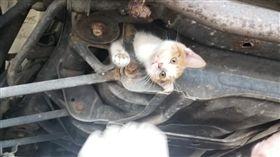 (16:9)貓咪卡在汽車底盤,神情相當驚慌。(圖/翻攝自Midas of Frankfort臉書)