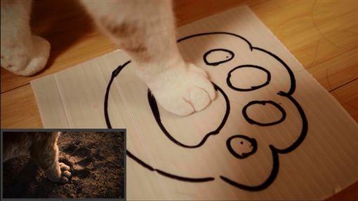 看完真人版《獅子王》太興奮 網友拍《喵喵王》神還原致敬圖/翻攝自bilibilihttps://www.bilibili.com/video/av58747350
