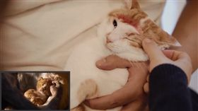 看完真人版《獅子王》太興奮 網友拍《喵喵王》神還原致敬 圖/翻攝自bilibili https://www.bilibili.com/video/av58747350