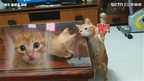 ▲正準備出拳時和小貓對望。(圖/網友 廖康雯 授權)