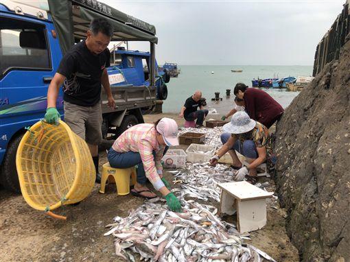 馬祖,漁村,白帶魚