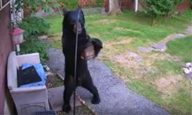 美國,黑熊,民宅,偷吃,鄰居,黑狗。(圖/翻攝自YOUTUBE)