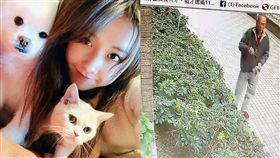名人社區成貓墳場 30毛孩慘被毒殺 圖/周刊王授權提供