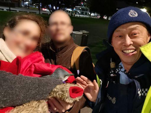 兩隻小藍企鵝躲進紐西蘭威靈頓地鐵站附近一家壽司店的吧台下面,老闆通報警察將牠們放回威靈頓港後,其中一隻企鵝晚間又跑回來。