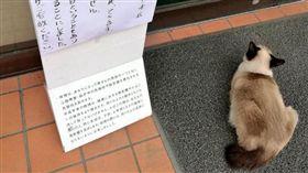 可愛的貓咪看似無害,但在民間卻有不少傳言,像是貓咪有9條命是「9命怪貓」、黑貓有陰陽眼會看見一般人看不到的鬼魂等,日本對於貓咪也有一句俗諺「猫は長者の生まれ変わり」,意思是貓咪是長者的轉世。而近日日本一家餐廳居然意外驗證這句話,因為有一隻貓咪突然莫名奇妙的賴在門口不走,店員才驚覺,原來這天是店長的忌日。(圖/翻攝自@ ringroad1推特)