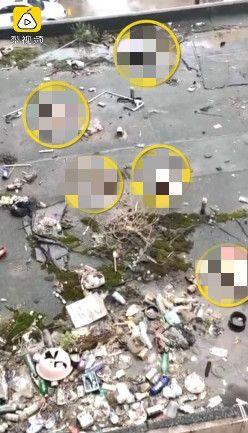 中國大陸,5隻狗遭人從高樓扔下慘死(圖/翻攝自梨視頻)