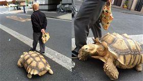 阿伯帶大象龜出門散步...網友越看越眼熟:原來是龜仙人(圖/翻攝自@hi_roshishi Twitter)