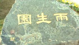 拍賣雨生墓1800