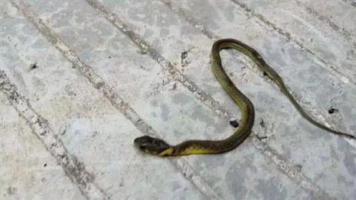 蛇,社區,爆廢公社,大陸(圖/翻攝爆廢公社)