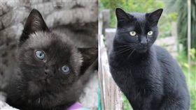 貓咪,毛色,驚喜包,變色,灰毛,黑貓。(圖/翻攝自brucethecatnz IG)