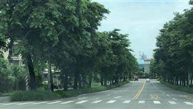 高雄,韓國瑜,路樹,樹木,紅綠燈(圖/翻攝自公民割草運動)