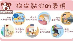 ▲狗狗黏你的表現(圖/愛你寵物網loveupets提供)