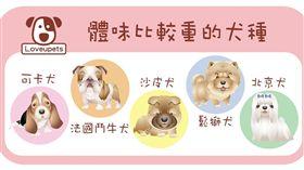 ▲幾種犬天生體味較重(圖/愛你寵物網loveupets提供)