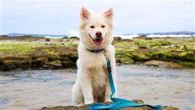 ▲毛對狗狗來說,是有保護作用的(圖/Pixabay)