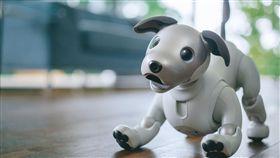 圖/業者提供,aibo機器狗