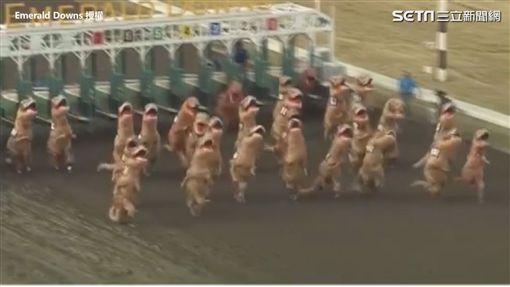 ▲參賽者穿著恐龍裝賽跑。(圖/Emerald Downs 授權)