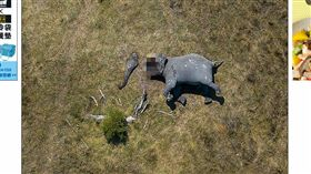 (圖/翻攝自每日郵報)非洲,大象,盜獵,殘忍,照片