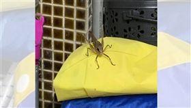 親人,過世,昆蟲,台灣騷蟴,雨衣(圖/網友授權提供)
