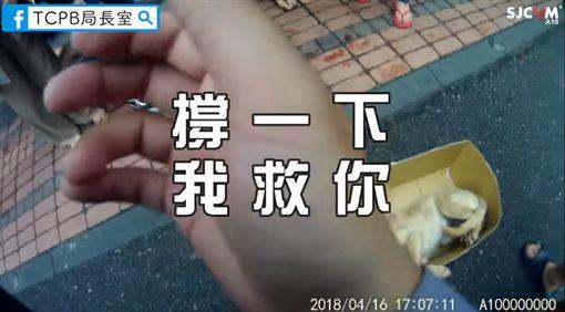 浪犬被撞吐血命危…暖警急喊:我救你,不要睡!萬人被逼哭圖/翻攝自TCPB 局長室臉書