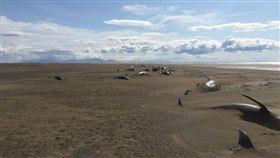 領航鯨,冰島,擱淺,直升機,斯奈山半島。(圖/翻攝自Strange Sound)