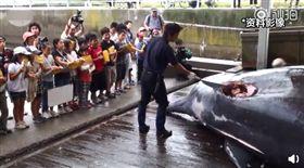 (圖/翻攝自微博)日本,捕鯨,小學生,觀摩,殺鯨