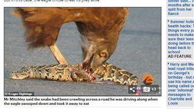 南非,老鷹,蛇,短趾雕,克魯格國家公園。(圖/翻攝自每日郵報)