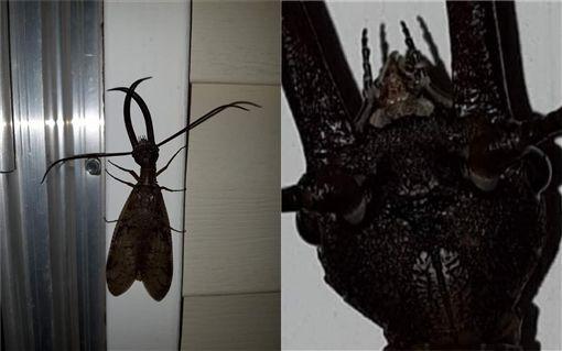 蛇蜻蜓,昆蟲(圖/翻攝自爆廢公社)