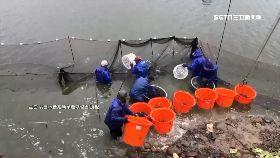 石門活魚斷1200