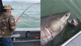 意外釣到凶狠大白鯊! 7人纏鬥20分鐘...整條船反被拖行3.2公里(圖/翻攝自Golden State Sportfishing FB)