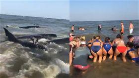 (辣妹們即刻救援!美國驚見「20多隻鯨魚」擱淺喬治亞海邊) 美國,喬治亞州,鯨魚,辣妹,海洋生態 (圖/翻攝自Dixie V. McCoy 臉書)