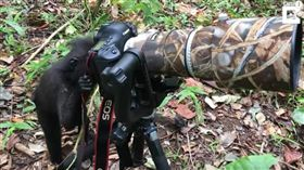 獼猴學拍照。(圖/翻攝自Caters Clips YT)