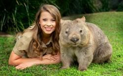 澳洲袋熊。(圖/翻攝自Australia Zoo官網)https://www.australiazoo.com.au/our-animals/animal-encounters/wombat-encounter.html