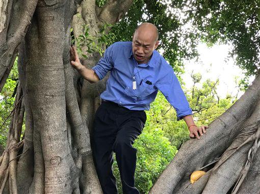 韓國瑜,爬樹,發泡劑,樹木,高雄,市長