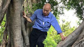 韓國瑜,爬樹,登革熱,樹洞,孳生,病媒蚊