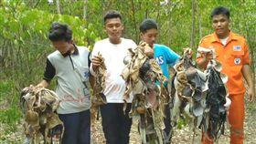 泰國,胸罩,樹上,森林,自慰。(圖/翻攝自泰國日報網)