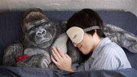 單身新夥伴!日本推「猩猩抱枕」擁你入睡 給妳男友般懷抱(圖/翻攝自Felissimo官網)