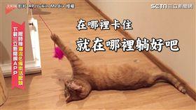 ▲體認到自己擺脫不了毛線,喵星人居然就索性身子一軟,整個身體躺在地上。(圖/AP/Jukin Media 授權)