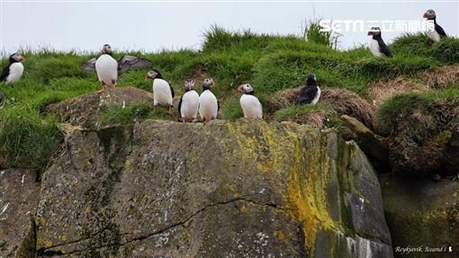 陳耀恩,Ean Chen,冰島,Puffin,北極海鸚,冰島吉祥物 勿用