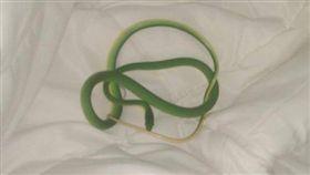 飯店,纏繞,手臂,美國,綠色襪帶蛇,園丁蛇。(圖/翻攝自推特)