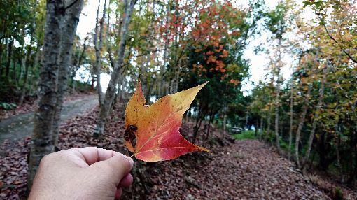 秋冬旅遊補助,觀光局,中國,來台,自由行,觀光效益