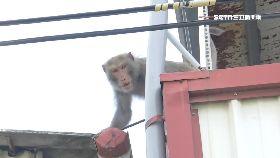 小猴走電線1200