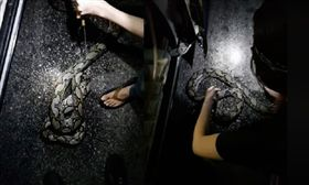 蟒蛇,新加坡,水溝,咬自己。(圖/翻攝自臉書)