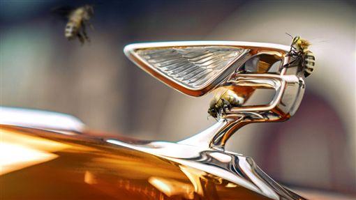 ▲Bentley Flying bees(圖/翻攝網路)