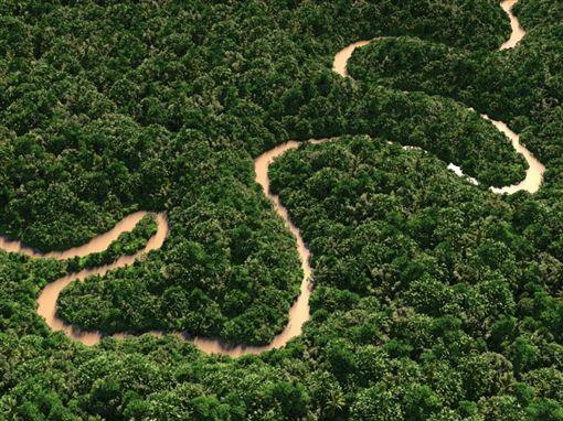 亞馬遜雨林。(圖/翻攝自維基百科)