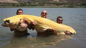 英國,西班牙,世界紀錄,白化鯰魚。(圖/翻攝自erabaru)