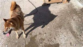 基隆一名女飼主日前將柴犬「浩呆」綁在頂樓,當時天氣炎熱,氣溫高達攝氏35度,動保所獲報派員前往稽查,依法開罰新台幣6000元。
