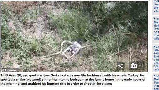 土耳其,蛇,懷孕,獵槍(圖/翻攝自每日郵報)